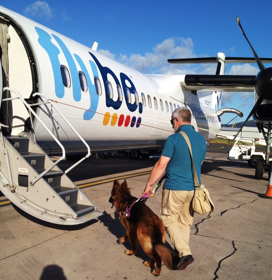 Guide dogs assistance dog aware for Small dogs on airplanes