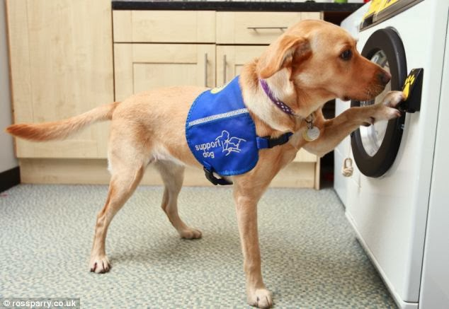 Assistance Dog Law Uk